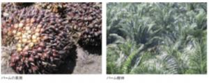 安心・安全の100%植物由来品